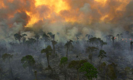 The biggest source of black carbon emissions is the burning of forest and savannah grasslands. Photograph: Dado Galdier / AP
